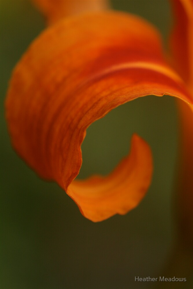 Curl by Heather Meadows