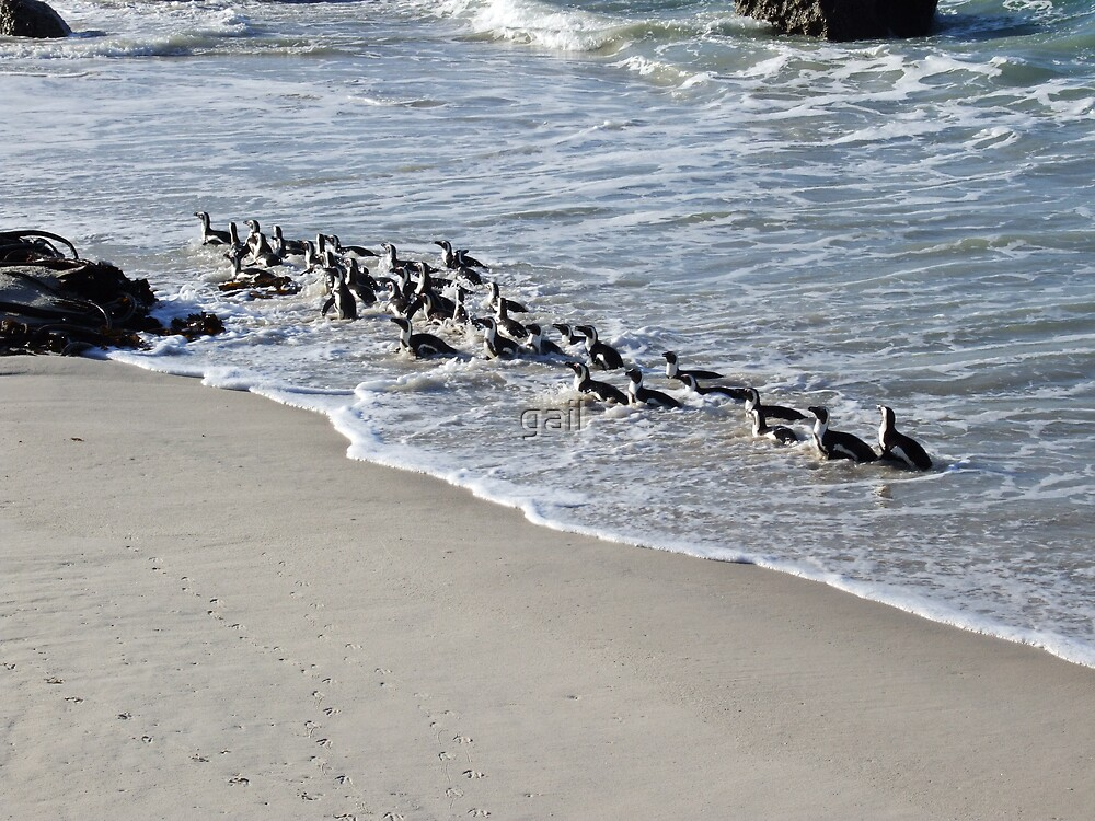 penguins by gail