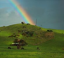 Hillside by Peter Hammer