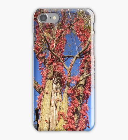 Red for Autumn Colors iPhone Case/Skin