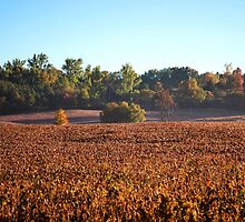 Canadian Autumn Country Fields by MissDawnM