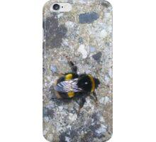 sun bathing bumble iPhone Case/Skin