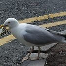Gull with Malborough by John Thurgood