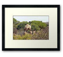 Emus In The Bush Framed Print