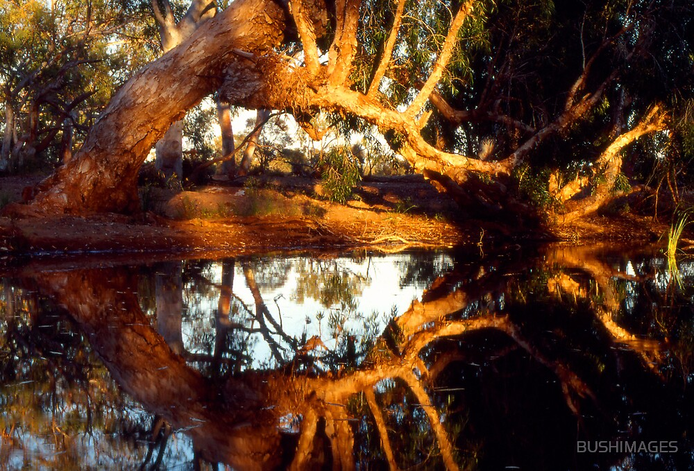 PAPERBARK REFELECTIONS by BUSHIMAGES