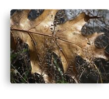 More beauty in nature Canvas Print