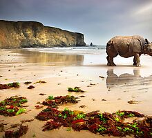 Beach Rhino by ccaetano