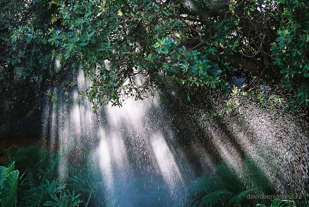 Tropical Rain by davidbenjamin333
