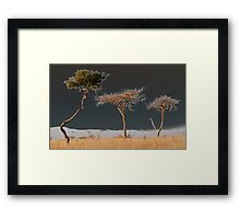 Out on a limb Framed Print