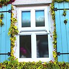 Cottage Window and Ivy Surround by philipclarke