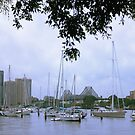 Sailboats in Brisbane, Australia by Jola Martysz