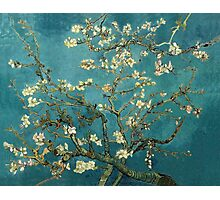 Blossoming Almond Tree, famous post  impressionism fine art oil painting by Vincent van Gogh.  Photographic Print