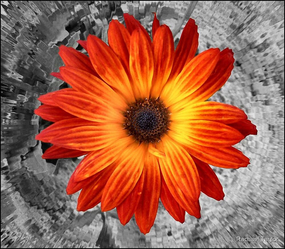 Burnt Orange by Rachael Taylor