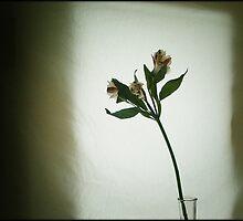 flower, 3.19.07 by zenhead