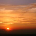 Glider Sunset by Moth