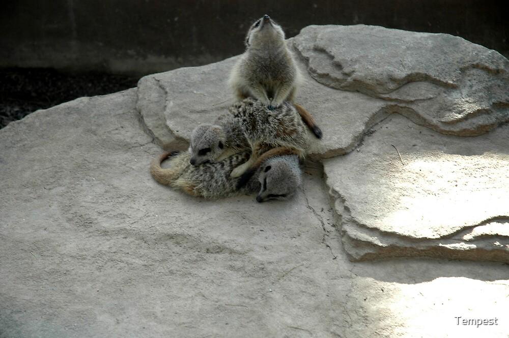 Adelaide Zoo - Meerkats by Tempest