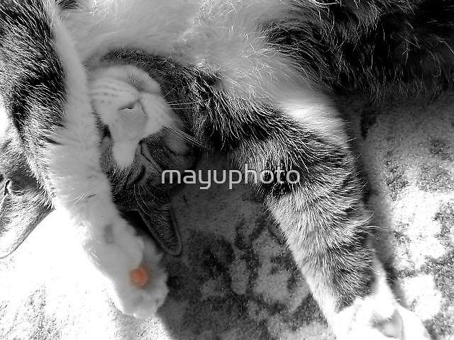 Don't disturb me by mayuphoto