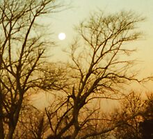 Moon in Trees by Erica Corr