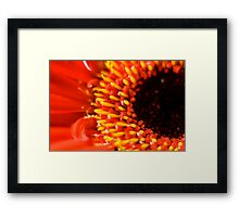 flower in red Framed Print