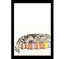 Relaxed Cat Photographic Print