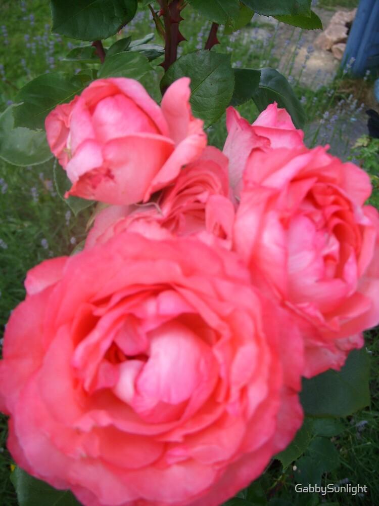 Sweet Rose by GabbySunlight