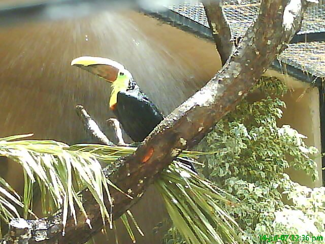 Toucan in the rain by lious