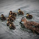 Eight little ducks went out one day... by AnnaKT