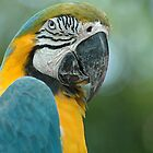 Parrot by Mary  Lane