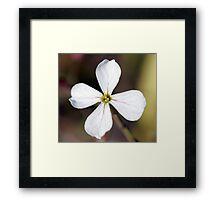 Radish Flower Framed Print