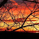 Sunrise by Penny Rinker