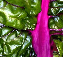Purple Chard by Stephen Maxwell