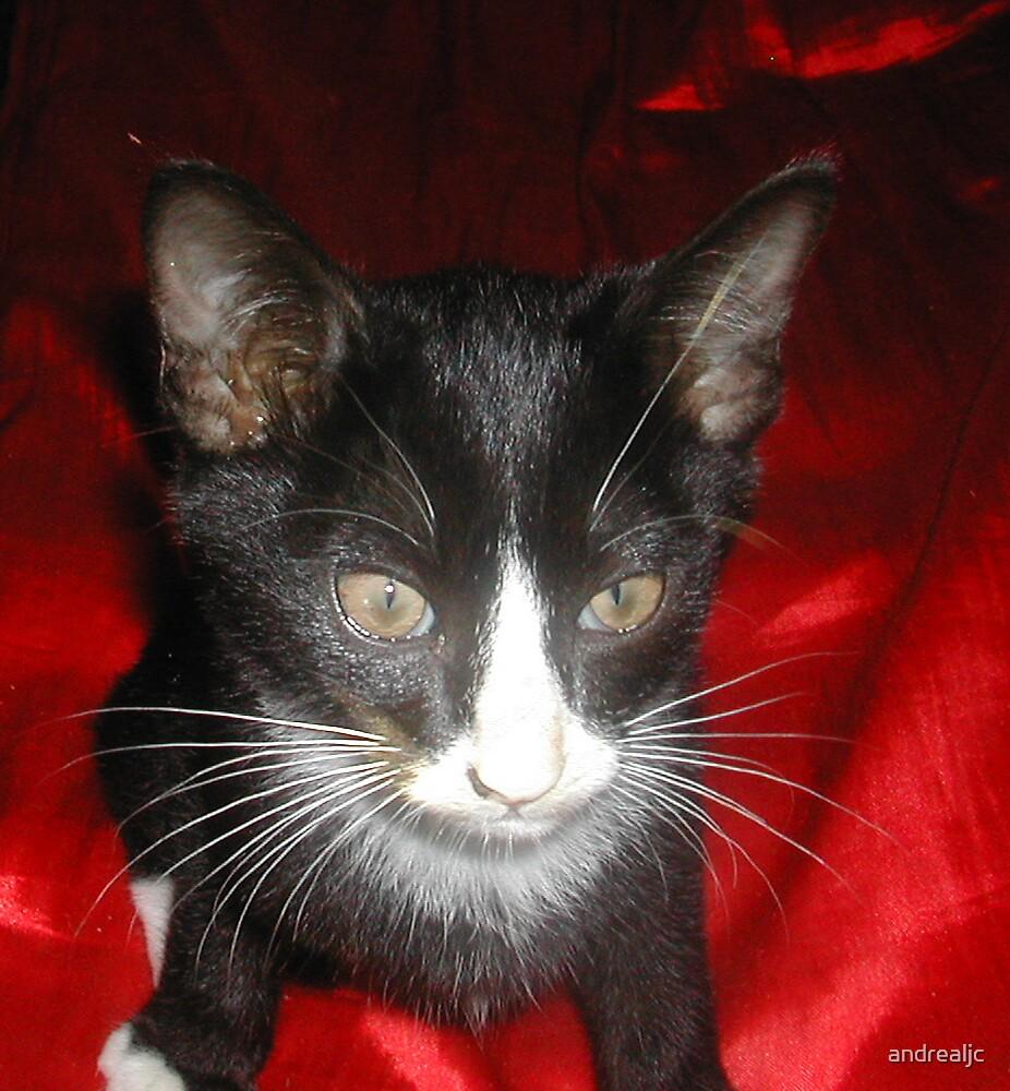 Kitten by andrealjc