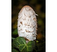 Shaggy Inkcap or the Lawyer's Wig Photographic Print