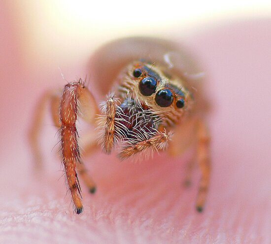 Spider on fingertip by Gary  Conyard