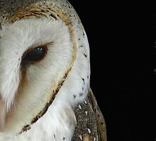 Barn Owl by Gary  Conyard