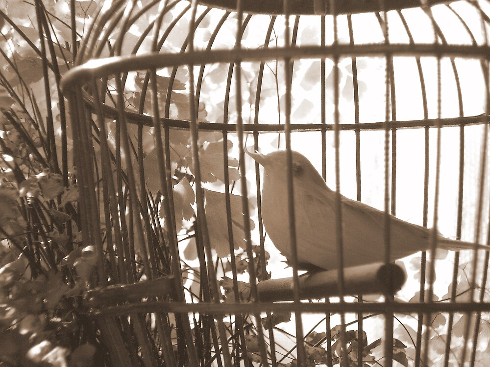 Cage Bird by gracespangle