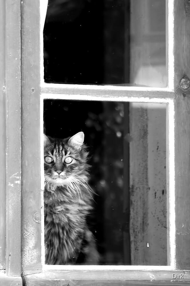 Window Cat by Dirk