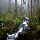 Out Of The Fog by Charles & Patricia   Harkins ~ Picture Oregon