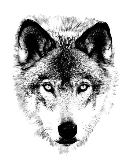 Wolf Face. Digital Wildlife Image. by digitaleclectic