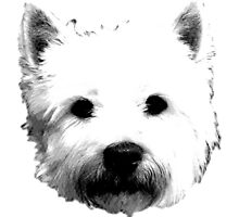West Highland White Terrier Westie Digital Engraving by digitaleclectic