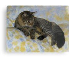 My Friends Maine Coon Cat Metal Print