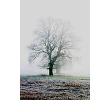 winter land Photographic Print