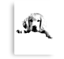 Golden Retriever Puppy Dog Engraving Canvas Print