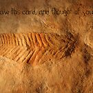 Fossil by Cathie Tranent