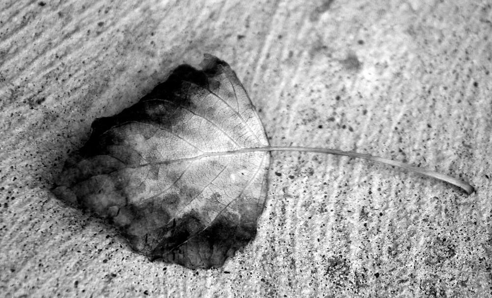 Winter Leaf by Reza Shams Latifi