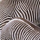 Black and white stripes by Adam Seward