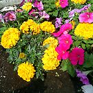 very colourful flowers by oilersfan11