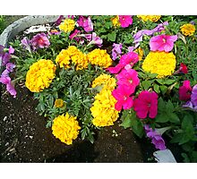 very colourful flowers Photographic Print