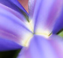 Iris by Catherine Tranter