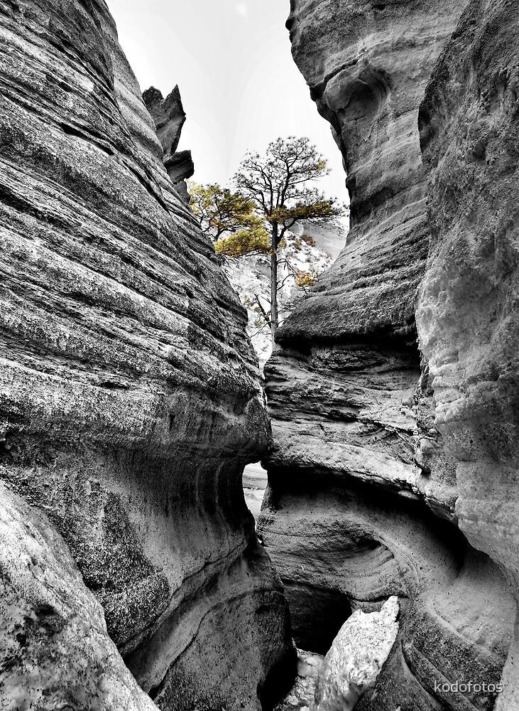 Tree Among the Rocks by kodofotos